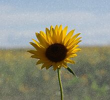 Sunflower by Tim Bates