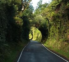 Road to Mt Taranaki by Judi Rustage