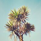 Palm by Cassia Beck