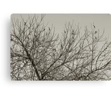 An early Winter's morn' Canvas Print