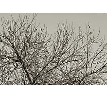 An early Winter's morn' Photographic Print