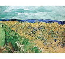 Vincent van Gogh Wheatfield with Cornflowers Photographic Print