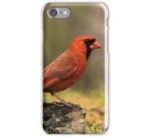Male Northern Cardinal iPhone Case/Skin