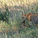 Leopard Kill by Macky
