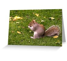 Nutty lunchtime Greeting Card