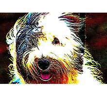 Sheepdog Photographic Print