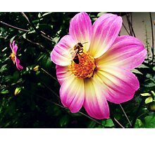 Bees eating a gigant flower Photographic Print