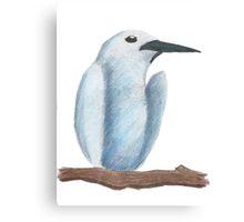 Tern Canvas Print
