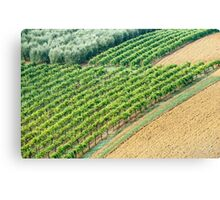 Olives, Vines, and ... Canvas Print