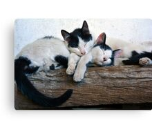 Cute kittens sleeping Canvas Print