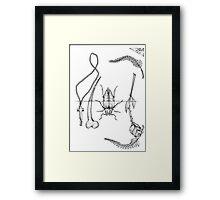 beetles & bones Framed Print