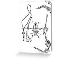 beetles & bones Greeting Card