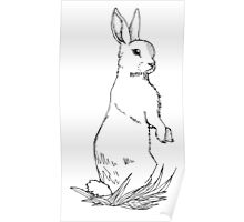 Standing Rabbit Poster