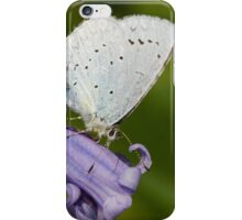 Holly Blue iPhone Case/Skin