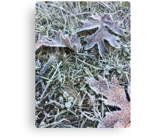 Frost Bitten Leaves Canvas Print