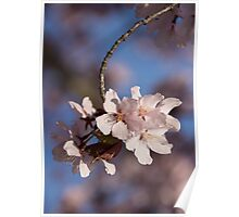 Pink Spring - Sunlit Blossoms and Blue Sky, Vertical Poster