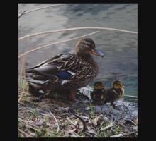 Momma Mallard and Ducklings One Piece - Short Sleeve