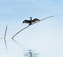 Cormorant drying its wings, SanFeliciano, Lago Trasimeno, Umbria, Italy by Andrew Jones