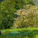 Hidden Magnolia by vivsworld