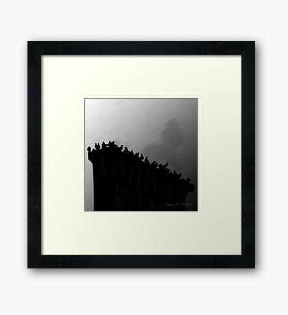 Pigeons On The Egypt 2011 Framed Print