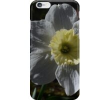 White Daffodil iPhone Case/Skin