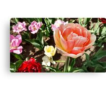 Pretty Pink Tulip in Full Bloom Canvas Print