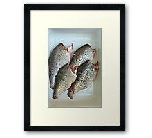 fresh gutted fish  Framed Print