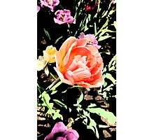 Tulips in the Sunlight Photographic Print