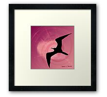 The Frigatebird 2011 Framed Print