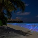 Fluorescent plankton in the Maldives - Indian Ocean by Bruno Beach