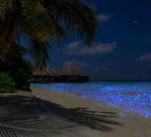 Fluorescent plankton in the Maldives - Indian Ocean by Atanas NASKO