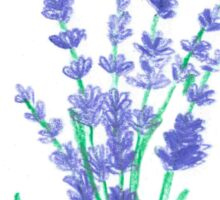 Hand draw flowers of lavender  Sticker