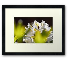 Little Flower Bee! Framed Print