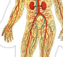 Anatomical Man Sticker