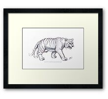 White Tiger @ Singapore Zoo Framed Print