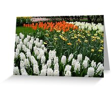 Fire and Ice - Dutch Bulbs in the Keukenhof Gardens Greeting Card