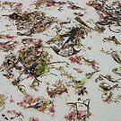 Scottish Seaweed - Bosta Beach by kathrynsgallery