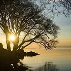 Golden Tranquility - Lacy Tree Silhouettes on the Lake Shore by Georgia Mizuleva