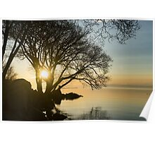 Golden Tranquility - Lacy Tree Silhouettes on the Lake Shore Poster