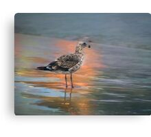 Young seagull at dawn Canvas Print