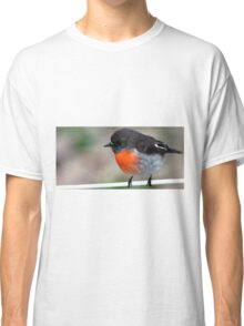 """Red Breasted Robin"" Posing on Fence Wire Classic T-Shirt"