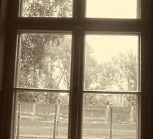 A Fleeting Glance ~ Outside the Window. . .  by Lucinda Walter