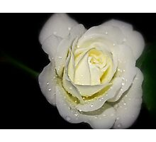 drops on a white rose at night Photographic Print