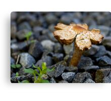 Tiny Toady on the Driveway Canvas Print