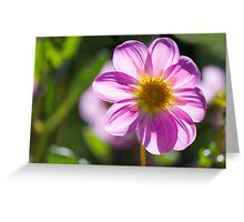 Tyalla Blush Dahlia Greeting Card