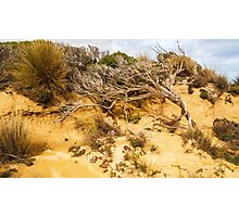 Death on the Dune Photographic Print