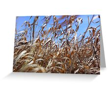 Prairie Grass and the Blue Sky   Greeting Card