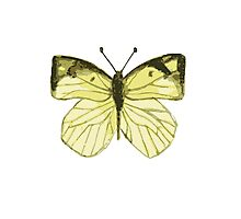 Lonely Butterfly Photographic Print
