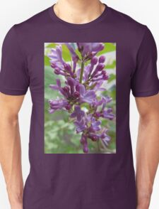 Early Lilac T-Shirt