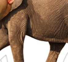 Nicolas Cage The Elephant Sticker
